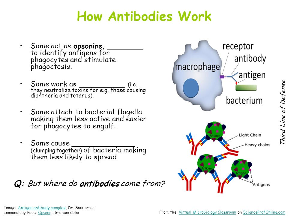 How Antibodies Work Some act as opsonins, ________ to identify antigens for phagocytes and stimulate phagoctosis.