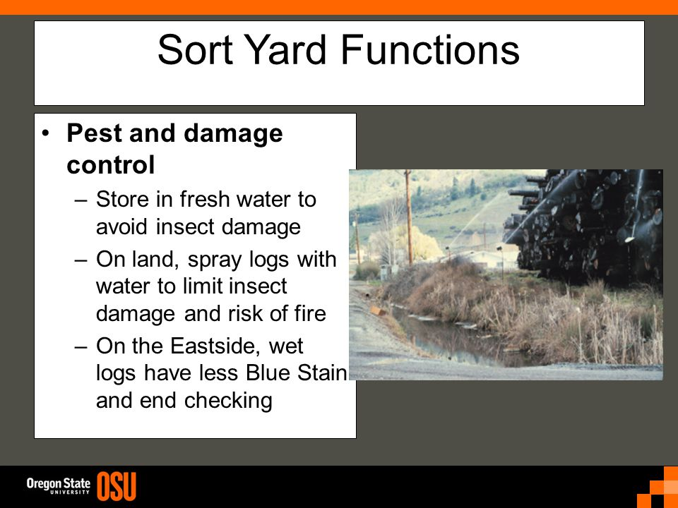 Sort Yard Functions Pest and damage control –Store in fresh water to avoid insect damage –On land, spray logs with water to limit insect damage and risk of fire –On the Eastside, wet logs have less Blue Stain and end checking
