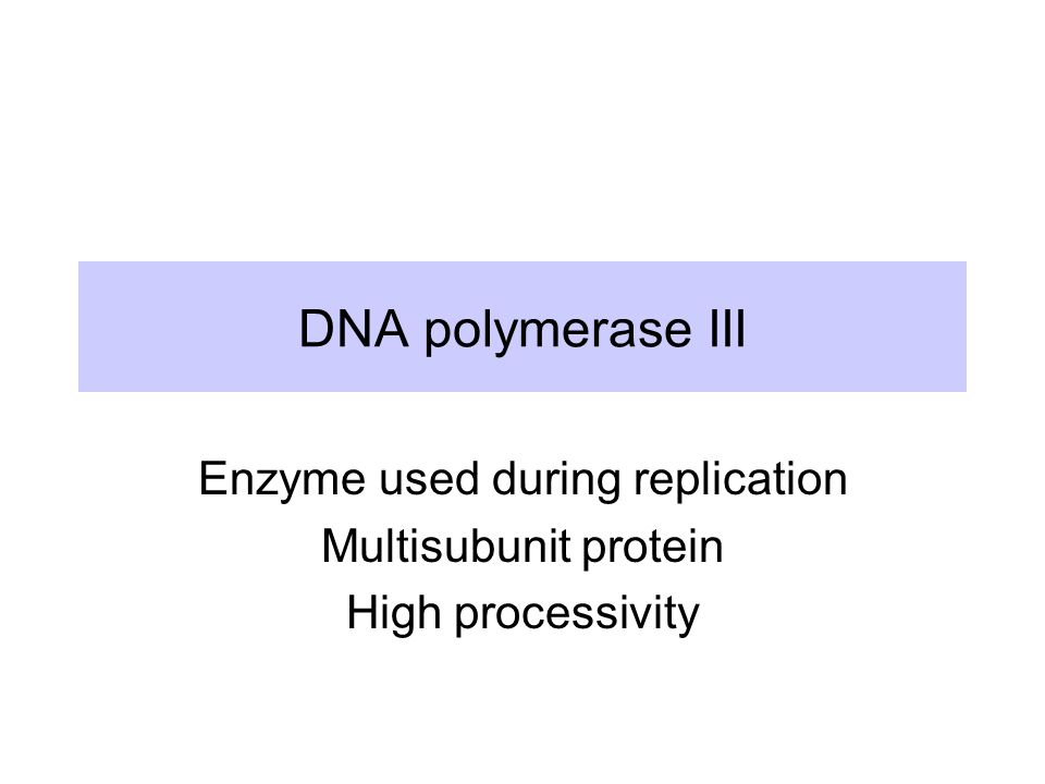 DNA polymerase III Enzyme used during replication Multisubunit protein High processivity