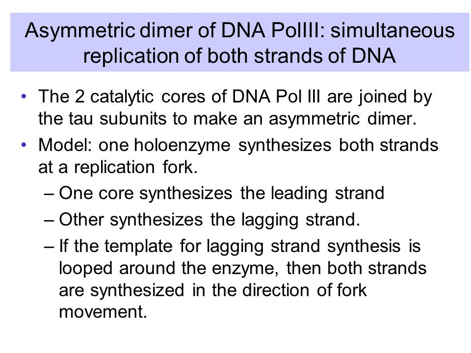 Asymmetric dimer of DNA PolIII: simultaneous replication of both strands of DNA The 2 catalytic cores of DNA Pol III are joined by the tau subunits to make an asymmetric dimer.