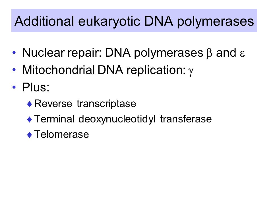 Additional eukaryotic DNA polymerases Nuclear repair: DNA polymerases  and  Mitochondrial DNA replication:  Plus:  Reverse transcriptase  Terminal deoxynucleotidyl transferase  Telomerase