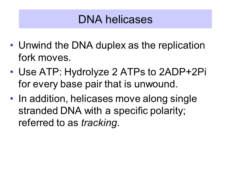 DNA helicases Unwind the DNA duplex as the replication fork moves.