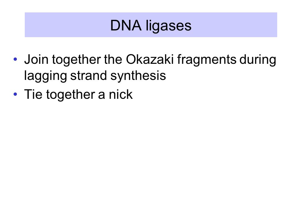 DNA ligases Join together the Okazaki fragments during lagging strand synthesis Tie together a nick