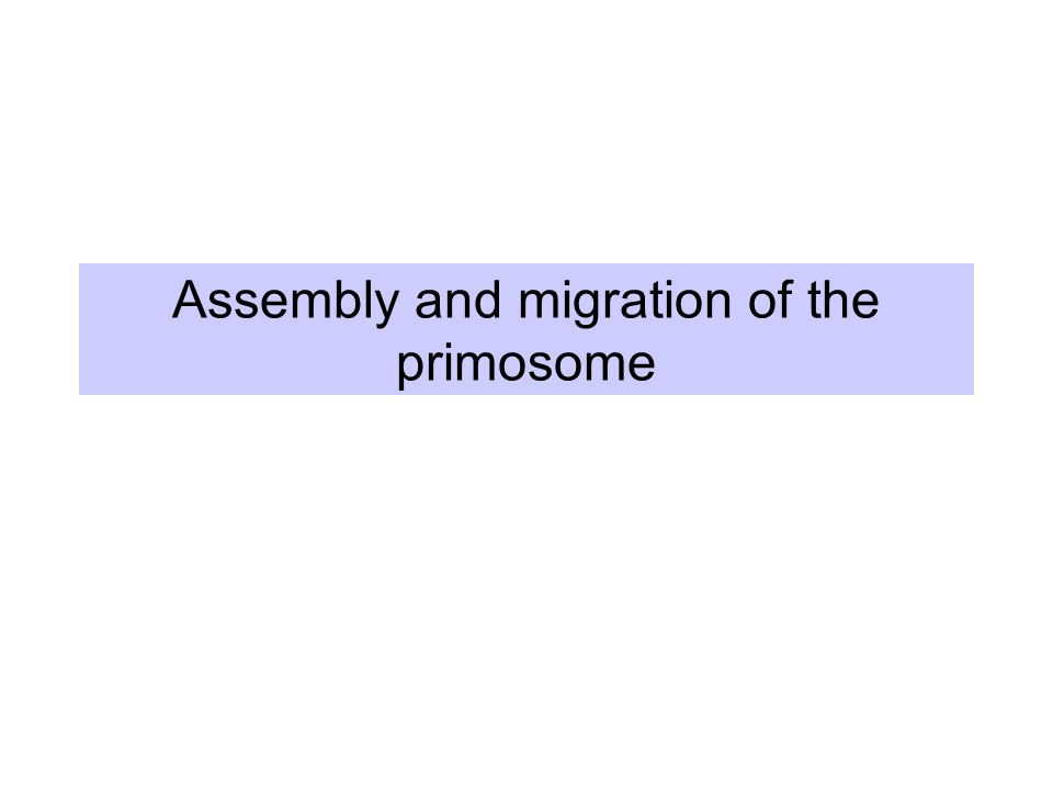 Assembly and migration of the primosome
