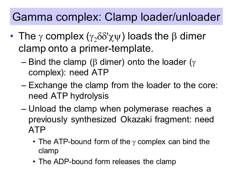 Gamma complex: Clamp loader/unloader The  complex (  2   ) loads the  dimer clamp onto a primer-template.