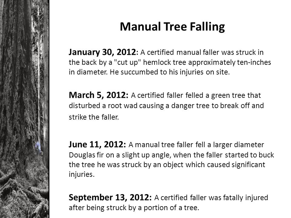 Manual Tree Falling January 30, 2012 : A certified manual faller was struck in the back by a cut up hemlock tree approximately ten-inches in diameter.