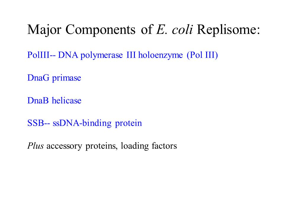 Major Components of E. coli Replisome: PolIII-- DNA polymerase III holoenzyme (Pol III) DnaG primase DnaB helicase SSB-- ssDNA-binding protein Plus ac