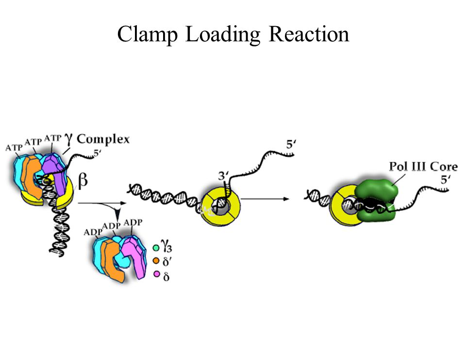 Clamp Loading Reaction