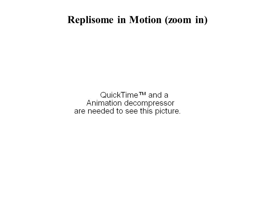 Replisome in Motion (zoom in)