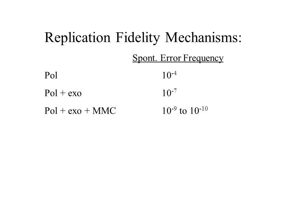 Replication Fidelity Mechanisms: Spont.