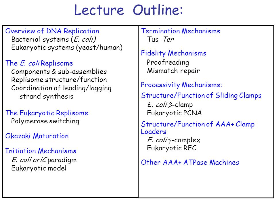 Lecture Outline: Overview of DNA Replication Bacterial systems (E. coli) Eukaryotic systems (yeast/human) The E. coli Replisome Components & sub-assem