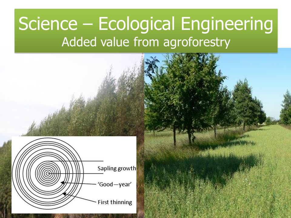Science – Ecological Engineering Added value from agroforestry