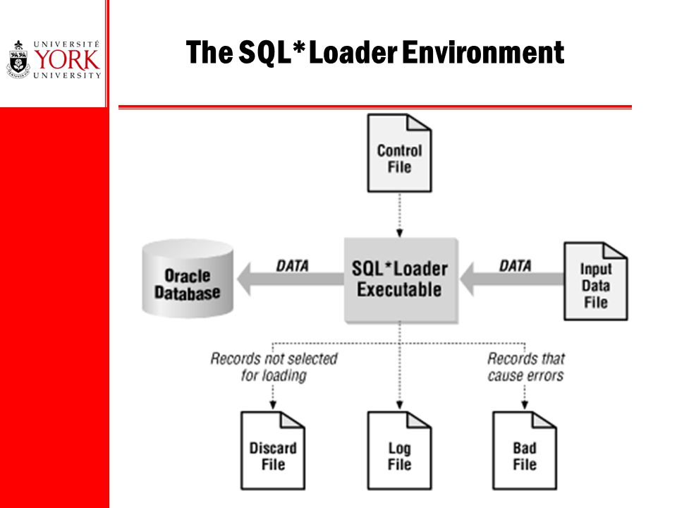 6 The SQL*Loader Environment