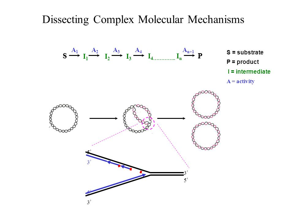 Dissecting Complex Molecular Mechanisms SP S = substrate P = product I = intermediate A = activity How to structurally characterize intermediates.