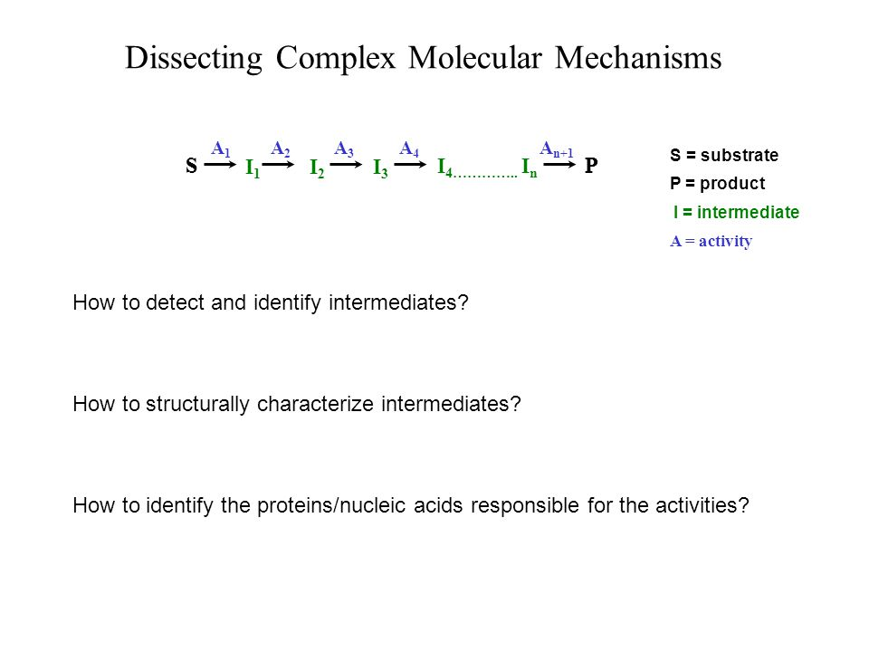 The sliding clamp is a ring that tethers the polymerase