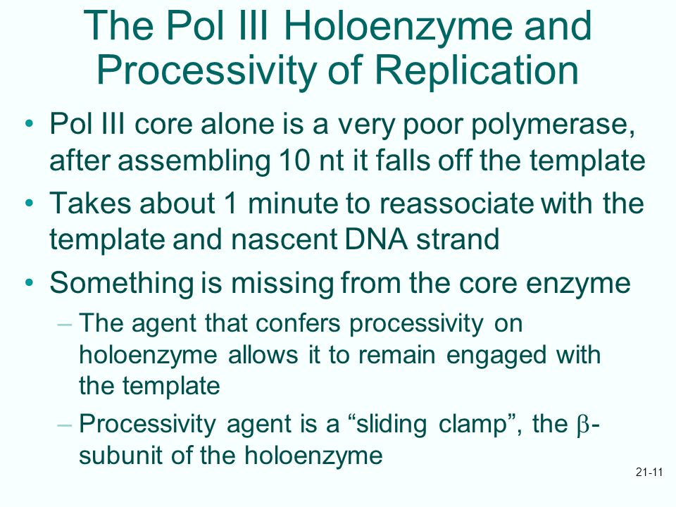 21-11 The Pol III Holoenzyme and Processivity of Replication Pol III core alone is a very poor polymerase, after assembling 10 nt it falls off the template Takes about 1 minute to reassociate with the template and nascent DNA strand Something is missing from the core enzyme –The agent that confers processivity on holoenzyme allows it to remain engaged with the template –Processivity agent is a sliding clamp , the  - subunit of the holoenzyme