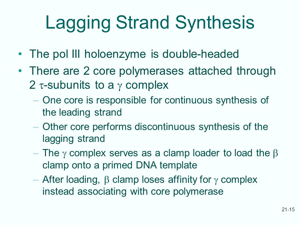 21-15 Lagging Strand Synthesis The pol III holoenzyme is double-headed There are 2 core polymerases attached through 2  -subunits to a  complex –One core is responsible for continuous synthesis of the leading strand –Other core performs discontinuous synthesis of the lagging strand –The  complex serves as a clamp loader to load the  clamp onto a primed DNA template –After loading,  clamp loses affinity for  complex instead associating with core polymerase