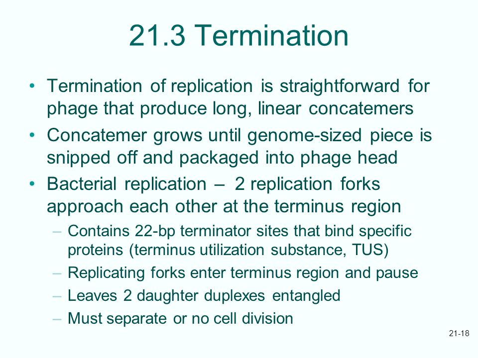 21-18 21.3 Termination Termination of replication is straightforward for phage that produce long, linear concatemers Concatemer grows until genome-sized piece is snipped off and packaged into phage head Bacterial replication – 2 replication forks approach each other at the terminus region –Contains 22-bp terminator sites that bind specific proteins (terminus utilization substance, TUS) –Replicating forks enter terminus region and pause –Leaves 2 daughter duplexes entangled –Must separate or no cell division
