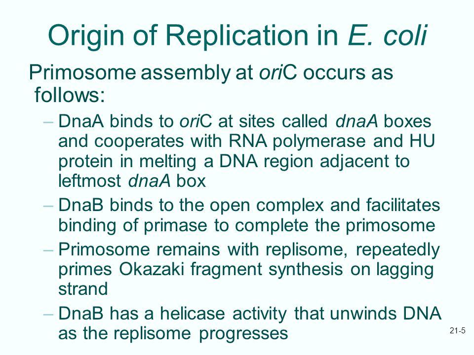 21-5 Origin of Replication in E.