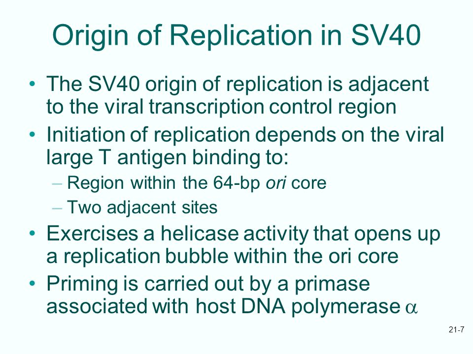 21-7 Origin of Replication in SV40 The SV40 origin of replication is adjacent to the viral transcription control region Initiation of replication depends on the viral large T antigen binding to: –Region within the 64-bp ori core –Two adjacent sites Exercises a helicase activity that opens up a replication bubble within the ori core Priming is carried out by a primase associated with host DNA polymerase 