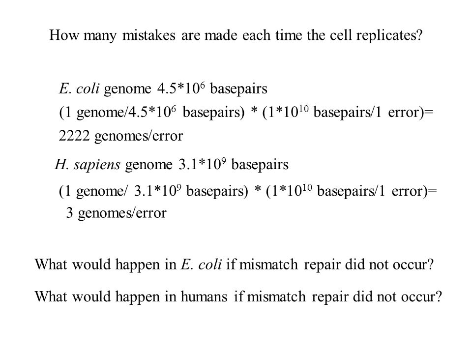 How many mistakes are made each time the cell replicates.