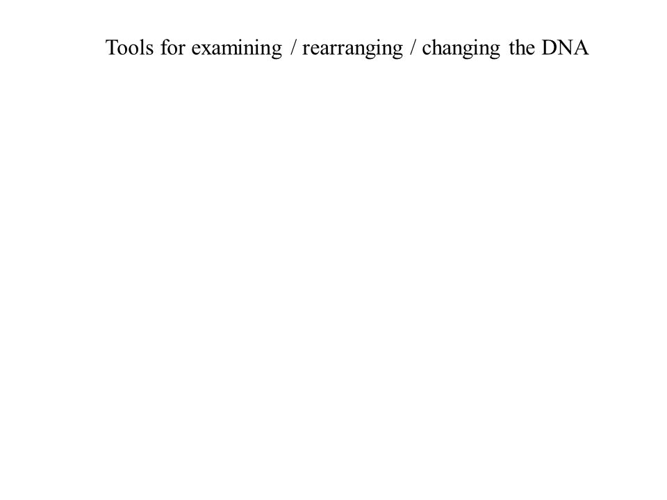 Tools for examining / rearranging / changing the DNA