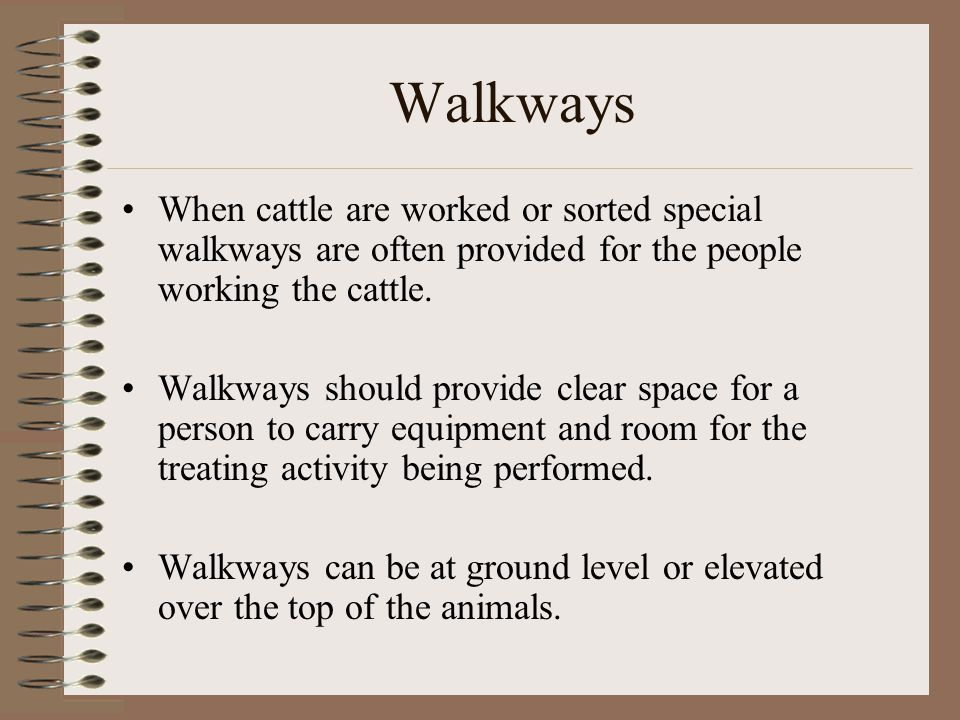Walkways When cattle are worked or sorted special walkways are often provided for the people working the cattle. Walkways should provide clear space f