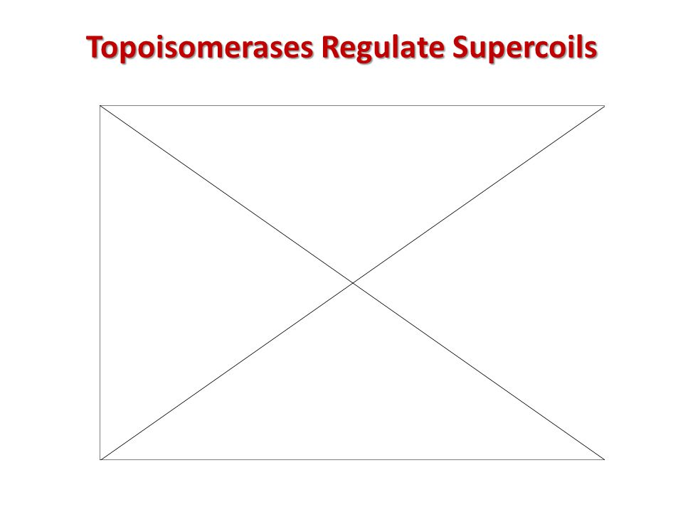 Topoisomerases Regulate Supercoils