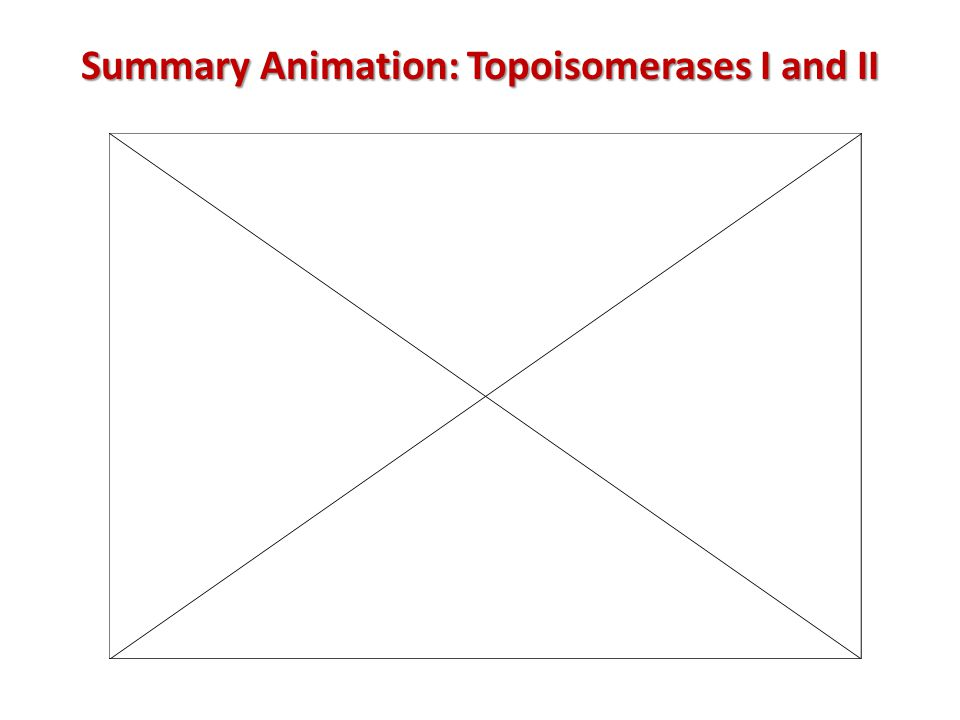 Summary Animation: Topoisomerases I and II