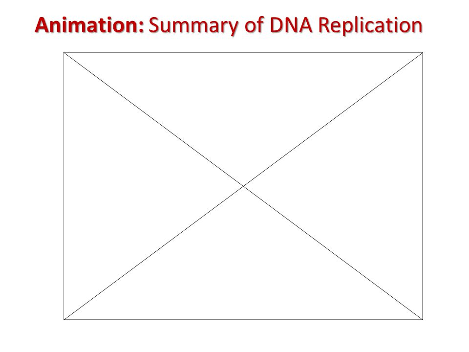 Animation: Summary of DNA Replication