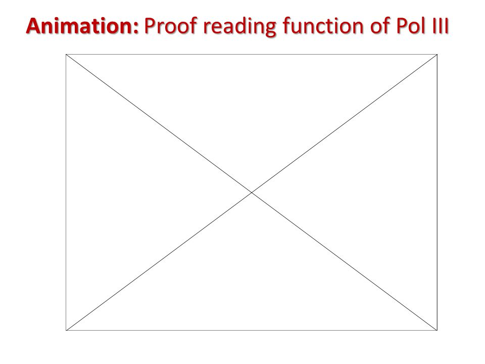Animation: Proof reading function of Pol III
