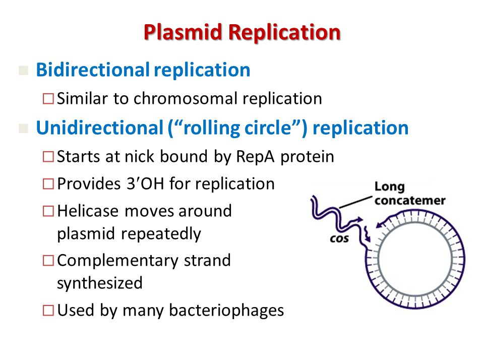 Plasmid Replication Bidirectional replication  Similar to chromosomal replication Unidirectional ( rolling circle ) replication  Starts at nick bound by RepA protein  Provides 3OH for replication  Helicase moves around plasmid repeatedly  Complementary strand synthesized  Used by many bacteriophages