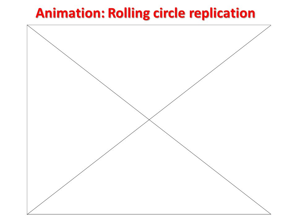 Animation: Rolling circle replication