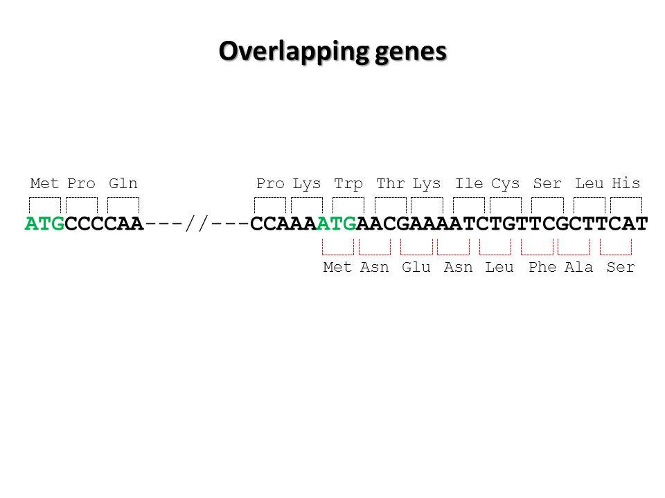 ATGCCCCAA---//---CCAAAATGAACGAAAATCTGTTCGCTTCAT MetProGlnProLysTrpThrLysIleCysSerLeuHis MetAsnGluAsn LeuPheAlaSer Overlapping genes