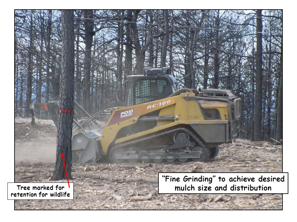 """""""Fine Grinding"""" to achieve desired mulch size and distribution Tree marked for retention for wildlife"""