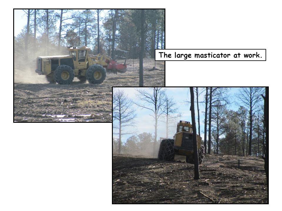 The large masticator at work.