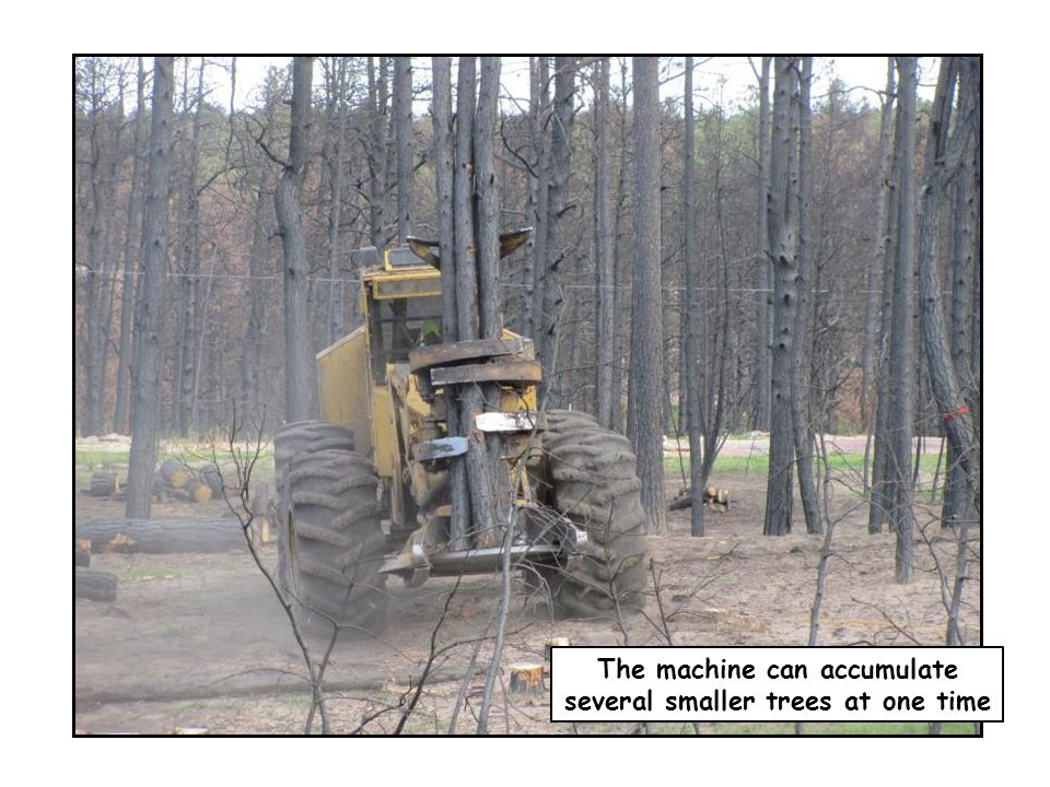 The machine can accumulate several smaller trees at one time