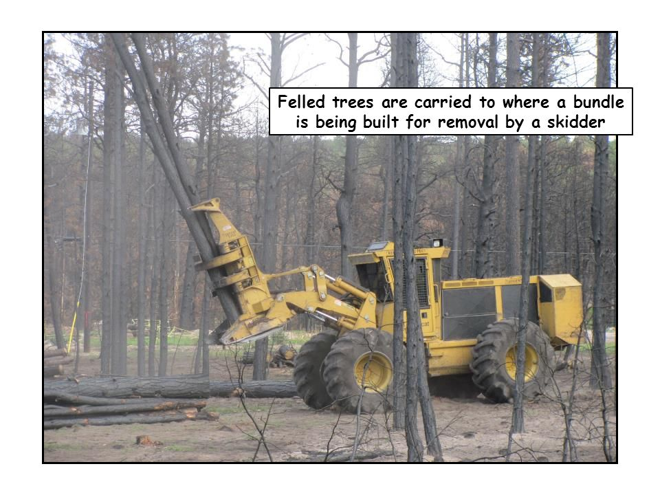 Felled trees are carried to where a bundle is being built for removal by a skidder