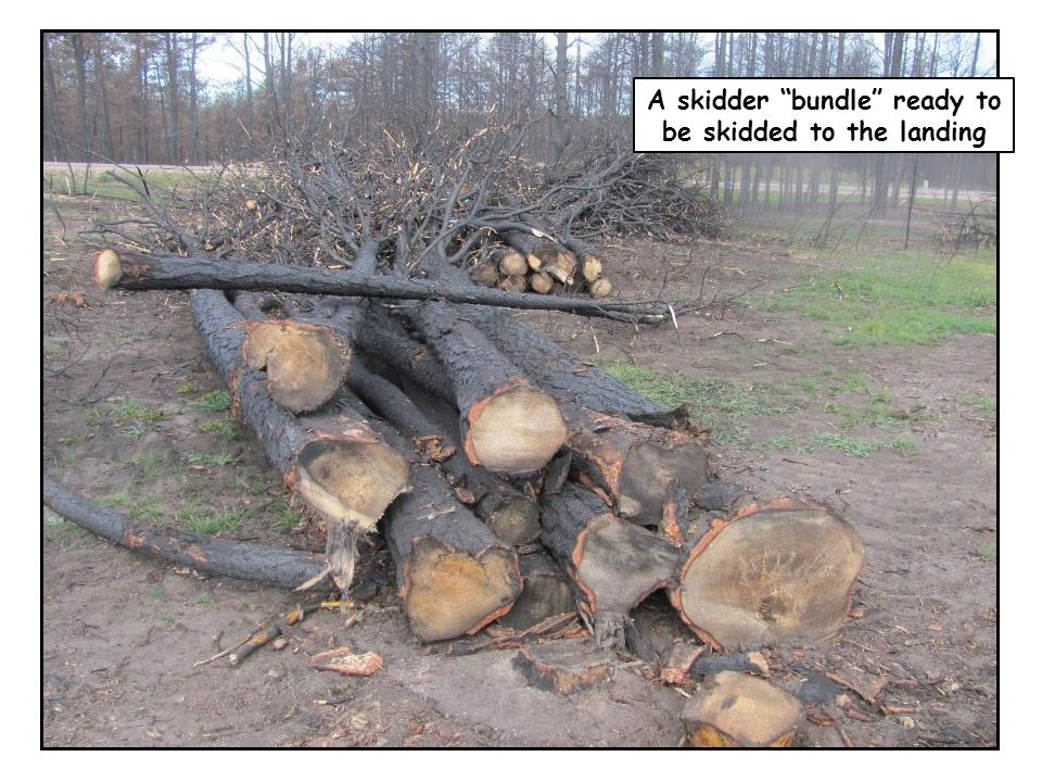 """A skidder """"bundle"""" ready to be skidded to the landing"""