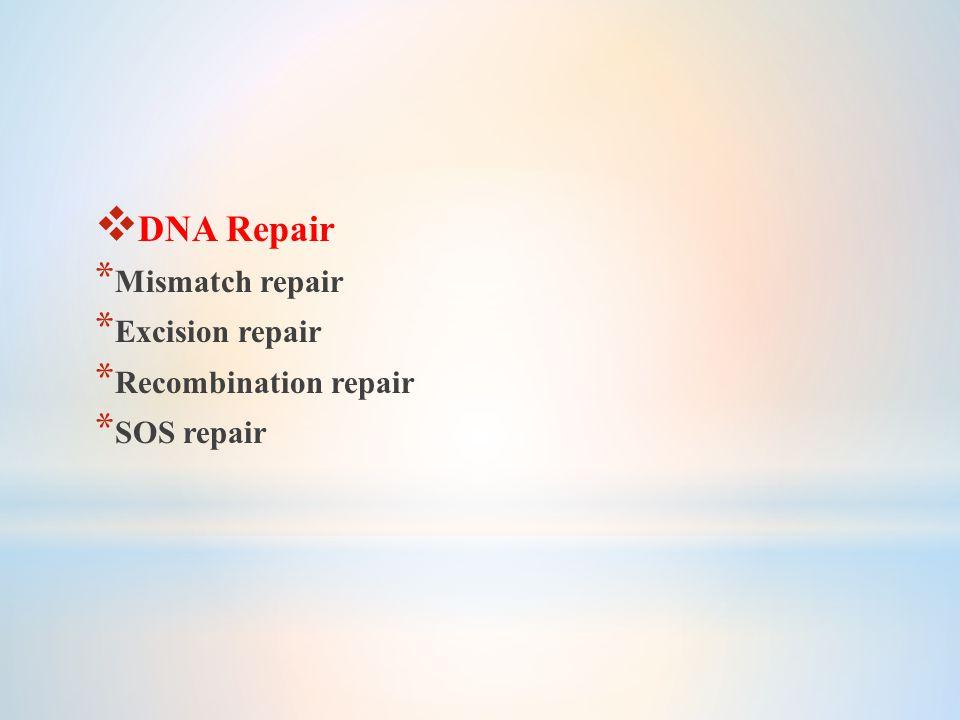  DNA Repair * Mismatch repair * Excision repair * Recombination repair * SOS repair