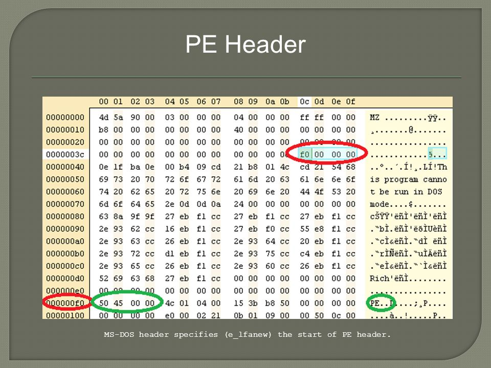 PE Header MS-DOS header specifies (e_lfanew) the start of PE header.