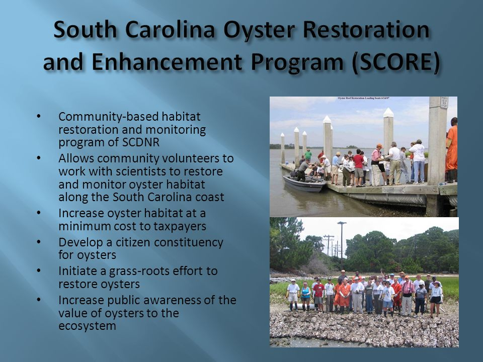 Community-based habitat restoration and monitoring program of SCDNR Allows community volunteers to work with scientists to restore and monitor oyster