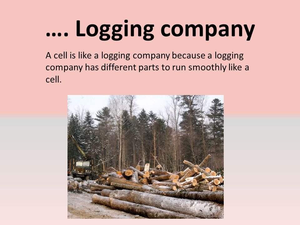 Nucleus Nucleus is like a the owner of the logging company he controls what goes on in the woods.