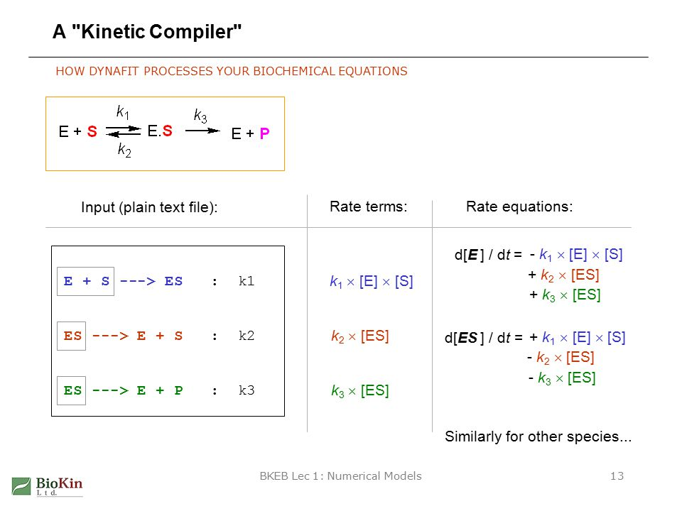 BKEB Lec 1: Numerical Models13 A Kinetic Compiler E + S ---> ES : k1 ES ---> E + S : k2 ES ---> E + P : k3 Input (plain text file): d[E ] / dt = - k 1  [E]  [S] HOW DYNAFIT PROCESSES YOUR BIOCHEMICAL EQUATIONS k 1  [E]  [S] k 2  [ES] k 3  [ES] Rate terms:Rate equations: + k 2  [ES] + k 3  [ES] d[ES ] / dt = + k 1  [E]  [S] - k 2  [ES] - k 3  [ES] Similarly for other species...