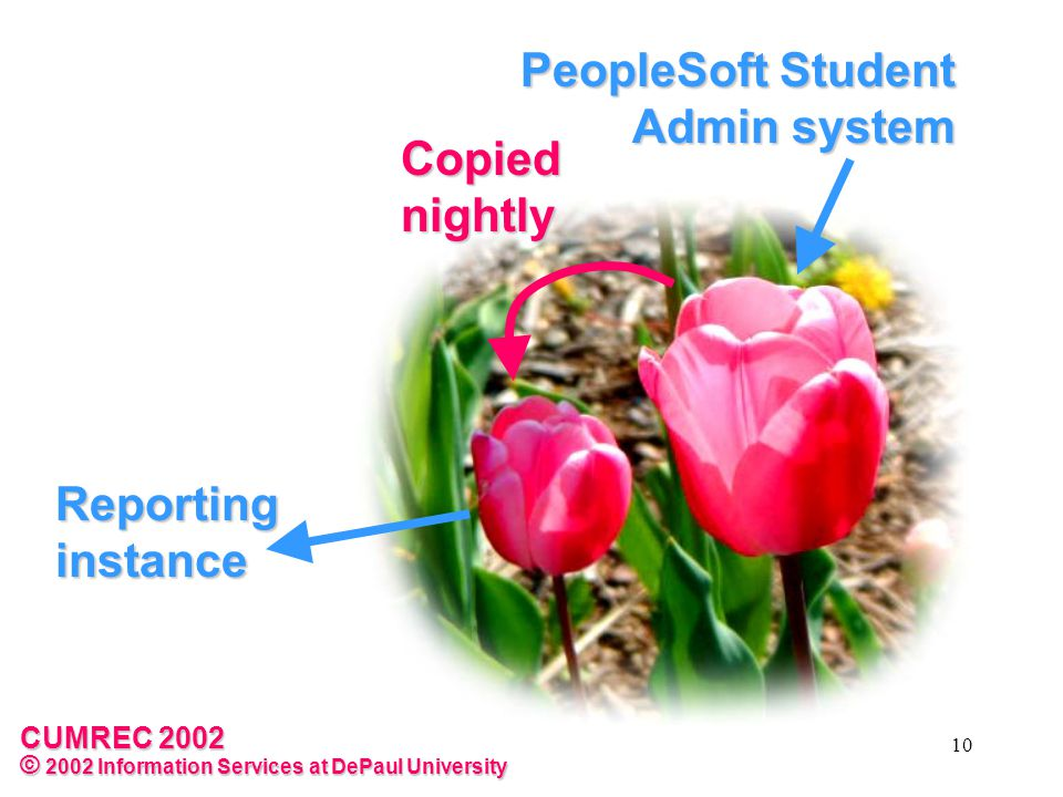 CUMREC 2002 © 2002 Information Services at DePaul University 10 Reporting instance PeopleSoft Student Admin system Copied nightly