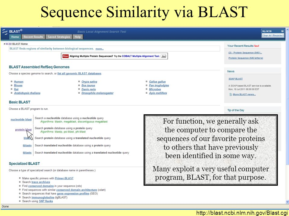 Sequence Similarity via BLAST For function, we generally ask the computer to compare the sequences of our favorite proteins to others that have previously been identified in some way.