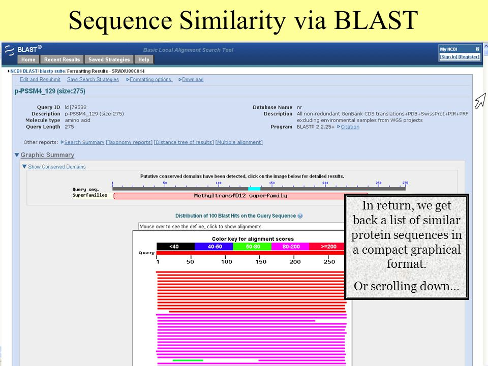 Sequence Similarity via BLAST In return, we get back a list of similar protein sequences in a compact graphical format.
