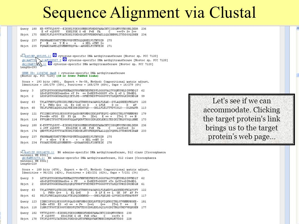 Sequence Alignment via Clustal Let s see if we can accommodate.