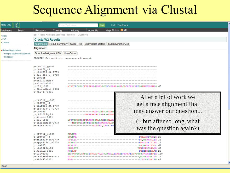 Sequence Alignment via Clustal After a bit of work we get a nice alignment that may answer our question… (…but after so long, what was the question again )