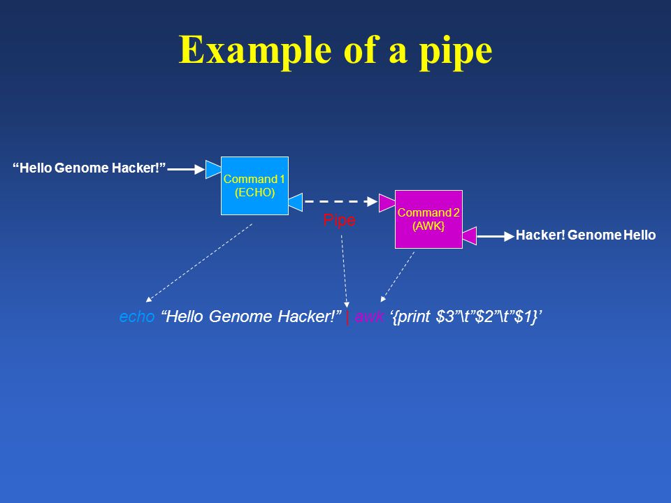 Example of a pipe Command 1 (ECHO) Command 2 (AWK} Pipe echo Hello Genome Hacker! | awk '{print $3 \t $2 \t $1}' Hello Genome Hacker! Hacker.